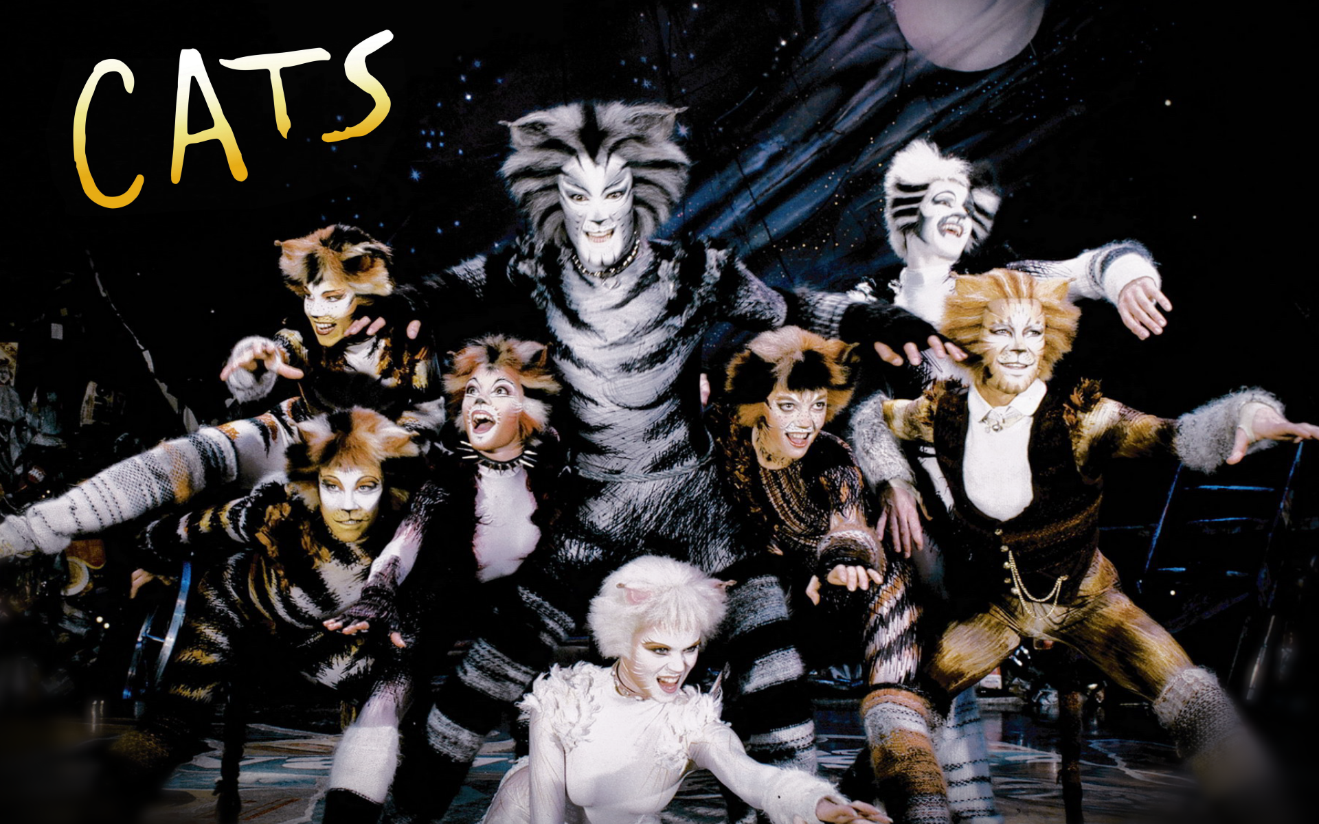 Family Review Of Musical Cats