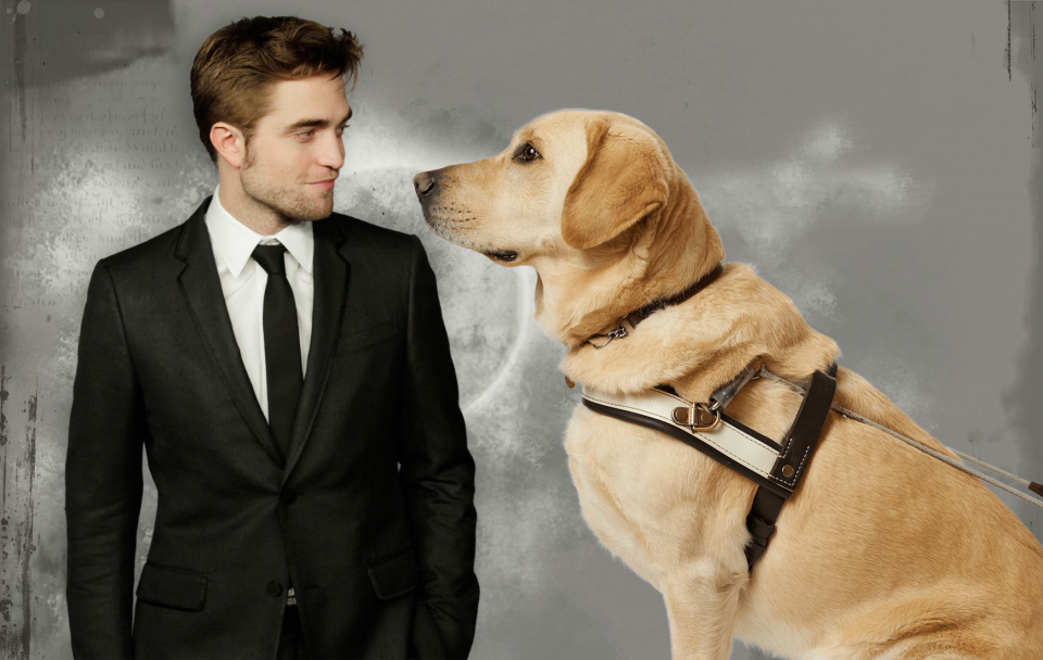 pattinson dog